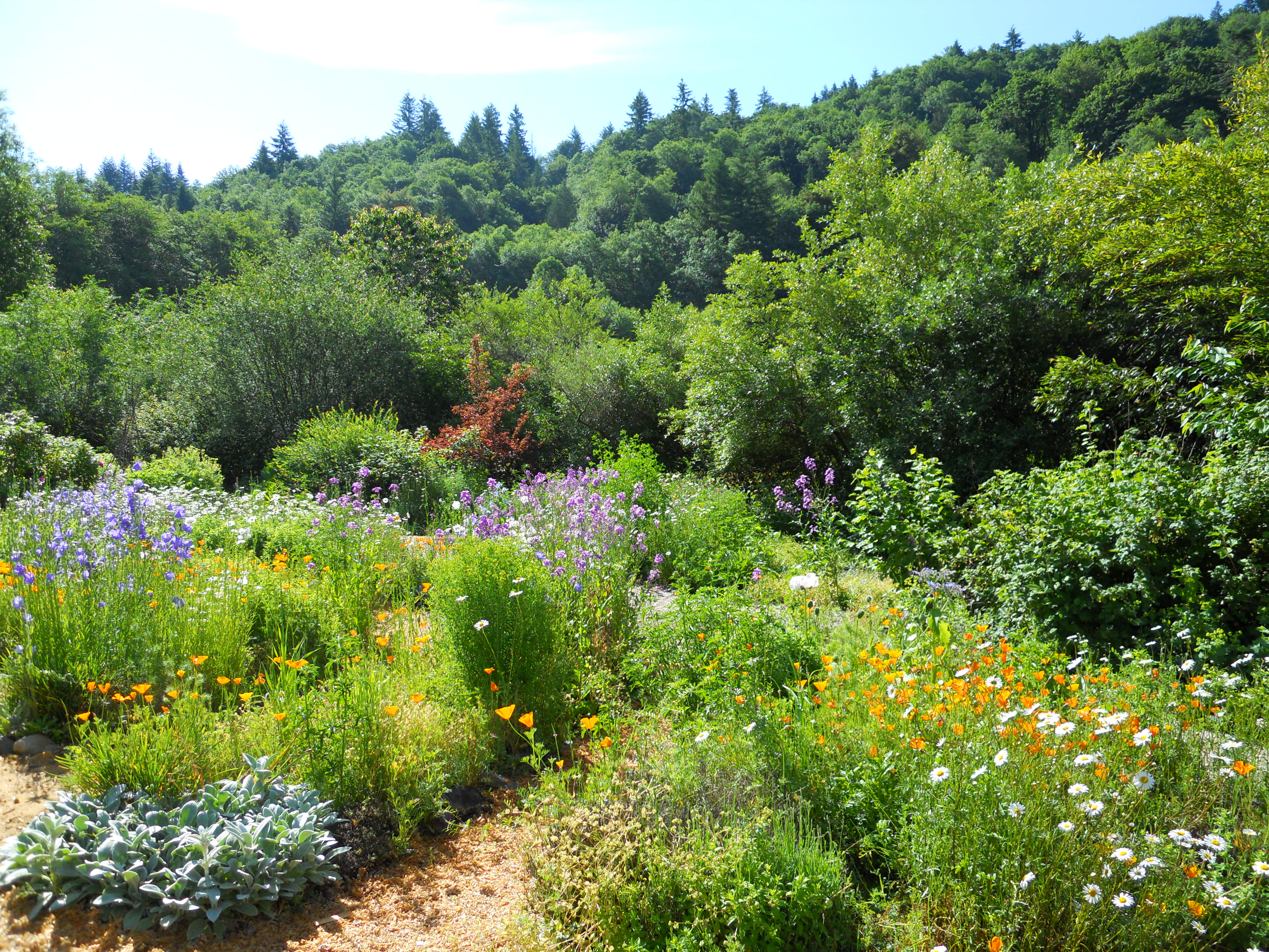 Food Forest Backyard :  Orchard A Sustainable Food Forest  PERMACULTURE & HEALING ARTS