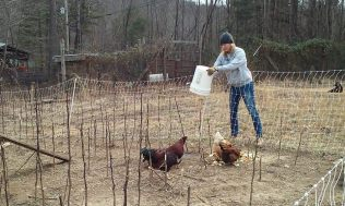 Jess feeding chickens